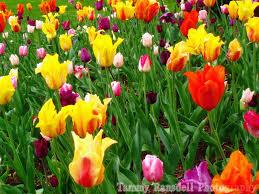 spring splash of colors scenery pinterest spring
