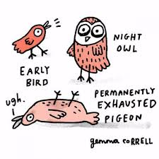 Exhausted Meme - i m the permanently exhausted pigeon funny dank memes gag