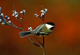bird friendly native plants audubon turn your yard into a winter refueling spot for birds audubon