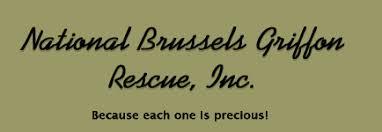 affenpinscher brussels griffon rescue national brussels griffon rescue inc
