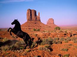 mustang horse american black mustang horse wallpaper helicalus hd wallpapers
