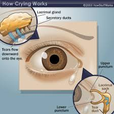 Eye Ducts Anatomy The Purpose Of Crying The Purpose Of Crying Howstuffworks