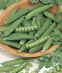 organic gardening organic seeds and supplies burpee com