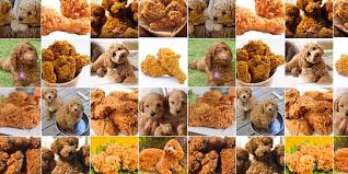 I Like Food Meme - dogs that look like stuff meme askmen
