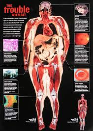Why Is Anatomy And Physiology Important All About Energy Balance Precision Nutrition
