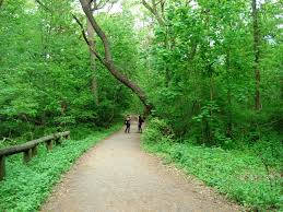 New York forest images Forest park trails in queens new york park in the summer new jpg