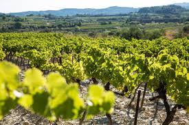 Family Gard Wines Domaine De La Valériane Office De Tourisme Du Pont Du Gard