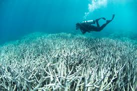 widespread coral bleaching in australia u0027s great barrier reef