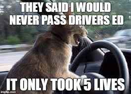 Driving Meme - never give up imgflip