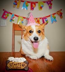Corgi Birthday Meme - more corgi cake corgi dog birthday party gif cake happy boxer