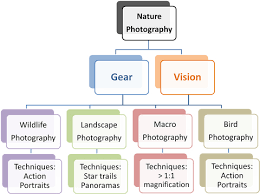Types Of Photography Learn About Nature Photography Right Here