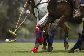 hey horse lovers uk plays polo too