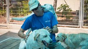 Pictures Of Blind Dogs For Blind Israelis Every Guide Dog Has Its Day The Times Of Israel