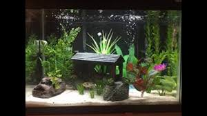 Naturally Home Decor by Natural Fish Tank Decoration Ideas Youtube