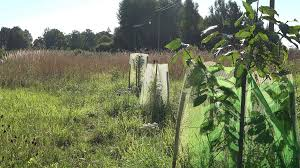 fruit trees seedlings protected from animals with net in