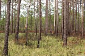 North Carolina vegetaion images The carnivorous plant faq where do carnivorous plants live in jpg