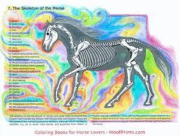 Dog Anatomy Book Horse Anatomy Coloring Book Www Hoofprints Com