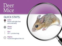 mice pest control parkersburg marietta athens