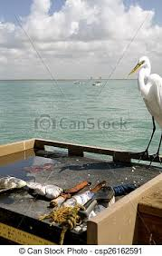 Cleaning Table Stock Images Royalty by Stock Photographs Of Bird Eyes Fish Cleaning Table A White Ibis
