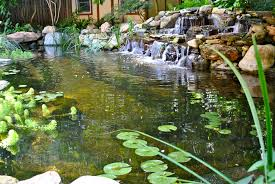 backyard koi ponds u0026 water garden installation in westfield nj