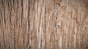 free photo tree wood bark trunk tree bark nature texture max pixel