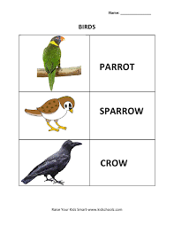 birds pictures and names for kids