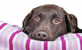 Tough Dog Bed Best Indestructible Dog Beds For Tough Chewers