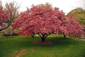 flowering trees photos