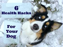 australian shepherd owners 6 health life hacks for dog owners life with aspen youtube