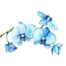 Blue Orchids Blue Orchids One Botanical Art Print Of Watercolor Painting