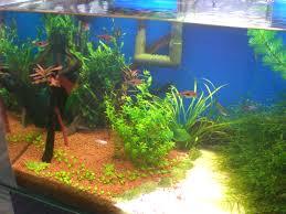 how to choose the right aquarium sand aquarium tidings