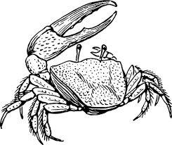 crab free pictures on pixabay