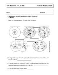 Mitosis And The Cell Cycle Worksheet The Best Cell Cycle Mitosis Coloring Worksheet Http Coloring