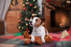 dog christmas how to make your dog s christmas day the best one pets4homes