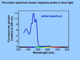 Blue Light Wavelength Blue Light Responses