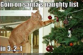 Cat Christmas Tree Meme - omg kittens christmas it will be the death of me babygaga
