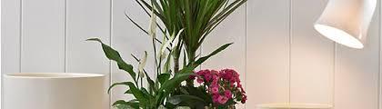 house plant buying guide ideas u0026 advice diy at b u0026q