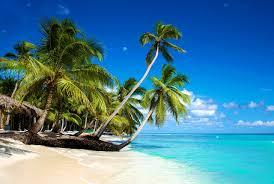 Palm Tree Wallpaper Images Beach Sea Nature Palms Tropics