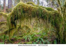 moss tree stock images royalty free images vectors