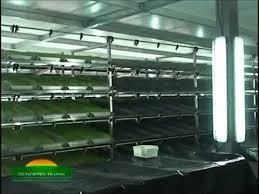 chambre hydroponique biotec production orge hydroponique