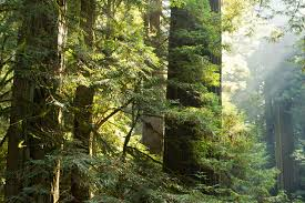 California Forest images Conducting forest restoration with private forest owners jpg