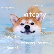 Doge Know Your Meme - fancy doge know your meme swimming doge doge 80 skiparty wallpaper