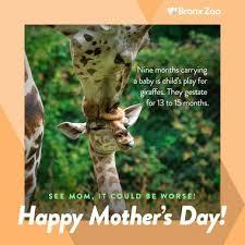 s day giraffe s day 2017 bronx zoo