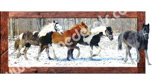 wall ideas horse wall decor stickers go to the product a white horse racing wall decals addthis sharing sidebar wild horse wall murals horse tile wall murals