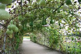squash and gourd tunnels that will simply amaze you