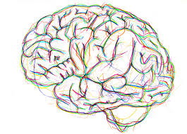 lizzy cunliffe jones brain drawing anatomy and artistry