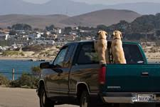 Truck Bed Dog Kennel Pet Travel Traveling With A Pet In A Pickup Truck Pet Travel Blog