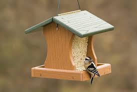 the experts in bird feeders bird houses and birding accessories
