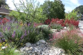native plant society of new mexico california native plant gardening and landscaping have tremendous