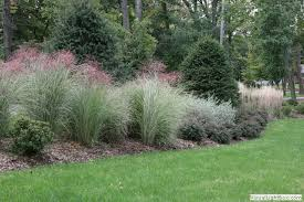 grasses for landscaping design home ideas pictures homecolors